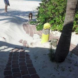 joy beach 2