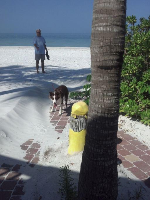 joy beach 4